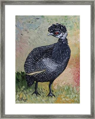 Crested Guineafowl Framed Print
