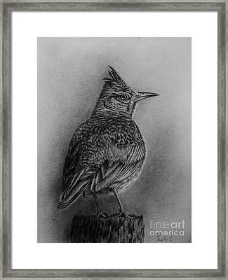 Crested Lark  Framed Print
