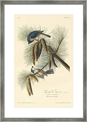 Crested Titmouse Framed Print