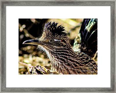 Cresting Roadrunner Framed Print