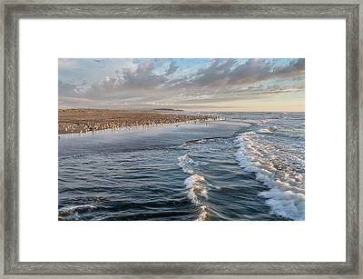 Crests And Birds Framed Print by Greg Nyquist