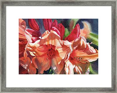Crimson And Bronze Rhododendron Framed Print by Sharon Freeman