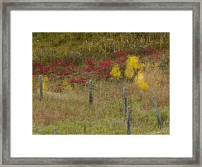 Crimson And Gold Framed Print by Tara Lynn