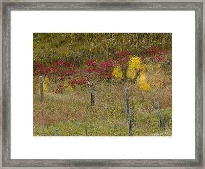 Framed Print featuring the photograph Crimson And Gold by Tara Lynn