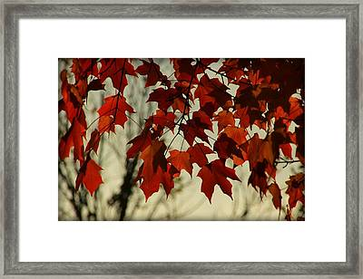 Framed Print featuring the photograph Crimson Red Autumn Leaves by Chris Berry