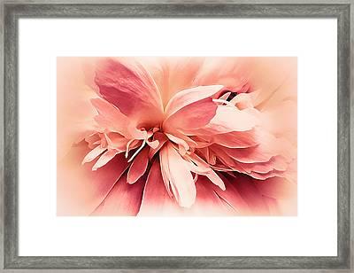 Framed Print featuring the photograph Crimson Ballet Powder Puff by Darlene Kwiatkowski