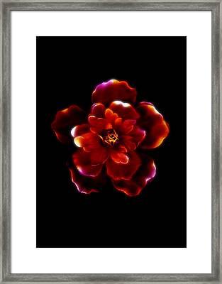 Crimson Bloom Framed Print by Dolly Mohr