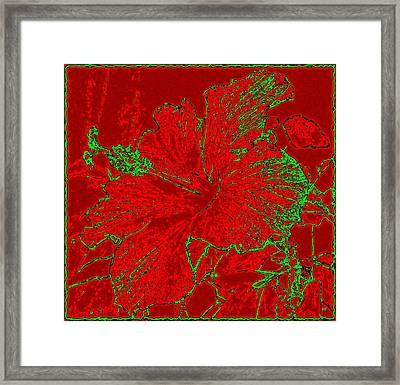 Crimson Hibiscus Framed Print by Will Borden