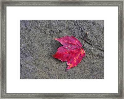 Crimson Framed Print by JAMART Photography