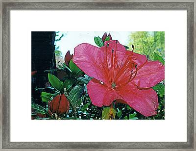 Framed Print featuring the photograph Crimson by Larry Bishop
