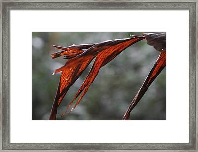 Crimson Leaf In The Amazon Rainforest Framed Print