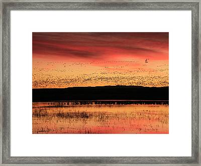 Crimson Sunset At Bosque Framed Print