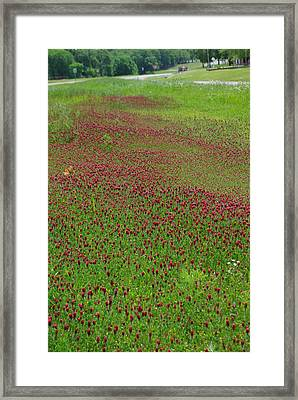 Crimson Tide Framed Print by Robyn Stacey