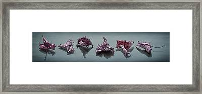 Crinkled Leaves  Framed Print by Maggie Terlecki