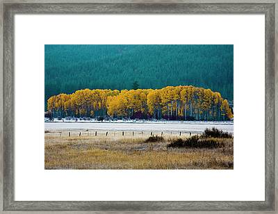 Crisp Aspen Morning Framed Print