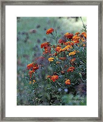 Crisp Autumn Marigolds  Framed Print