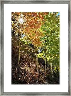 Crisp Framed Print by David Chandler