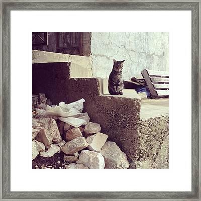 Croatian Cat Framed Print