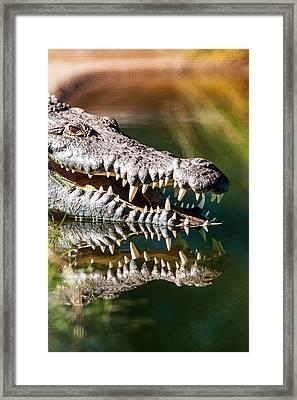 Crocodile With Sharp Teeth Framed Print by Susan Schmitz