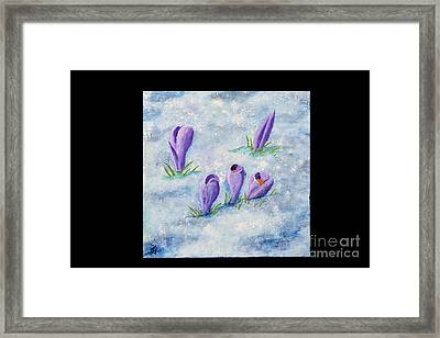 Crocus In The Snow Framed Print