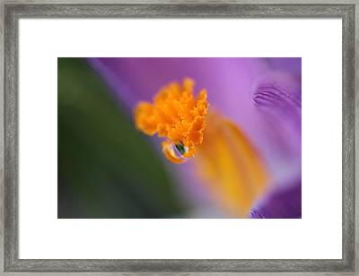 Saffron's Raindrop Marble Framed Print by Connie Handscomb