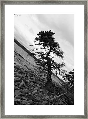 Crooked Framed Print by Becca Brann