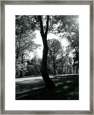 Crooked Tree Framed Print