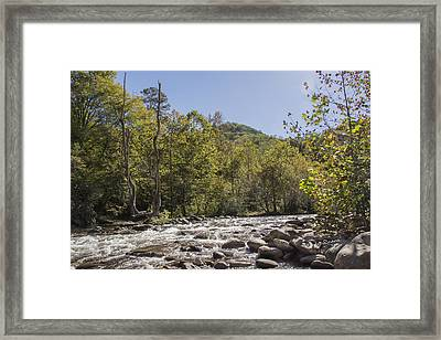 Crooked Tree Curve Framed Print by Ricky Dean