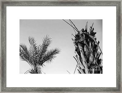 Crop Top Palm Framed Print