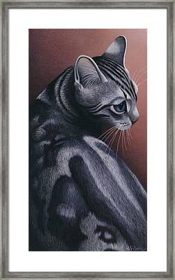 Cropped Cat 1 Framed Print by Carol Wilson