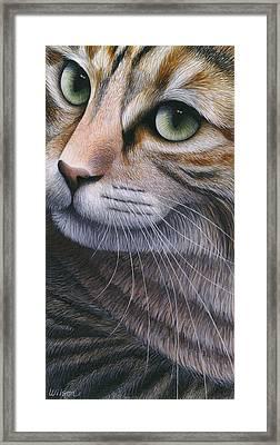Cropped Cat 2 Framed Print by Carol Wilson