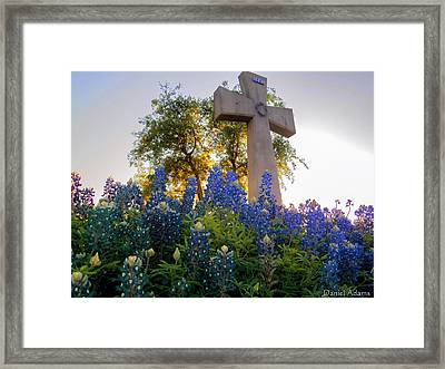 Da225 Cross And Texas Bluebonnets Daniel Adams Framed Print