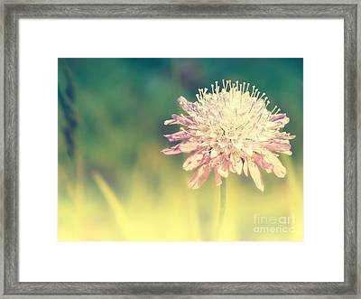 Pincushion Flower Framed Print by Angela Doelling AD DESIGN Photo and PhotoArt