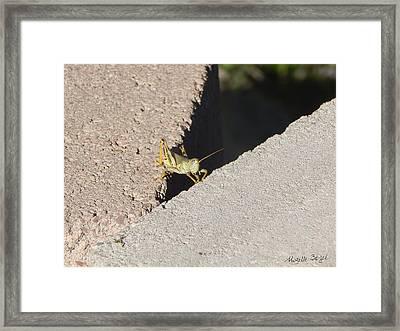 Cross Over Grasshopper Framed Print