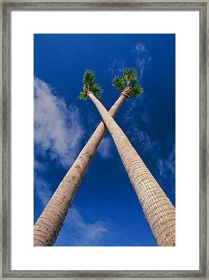 Crossed Palm Trees Framed Print by Rich Iwasaki