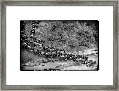 Crossing Framed Print by Alain Gaymard