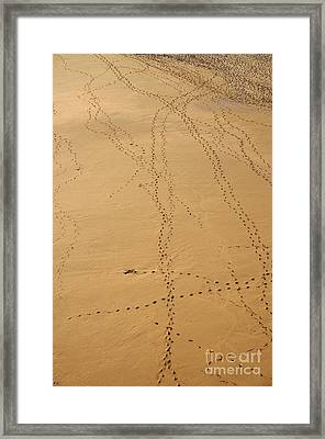 Crossing Paths Framed Print by Angelo DeVal