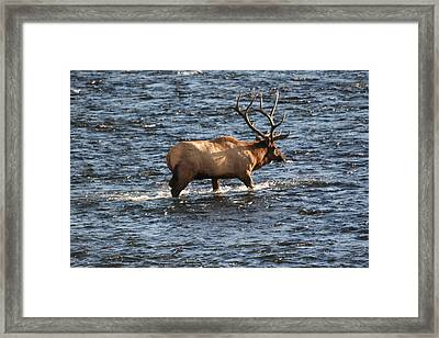 Crossing The Madison Framed Print by Dave Clark