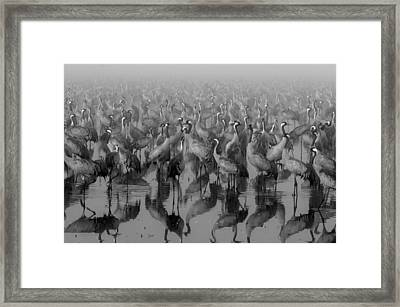 Crosspoint Framed Print by Ido Meirovich