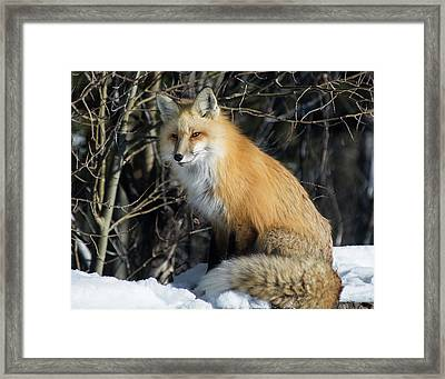 Crossroads With A Red Fox Framed Print