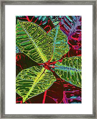 Croton - Deep Green Framed Print