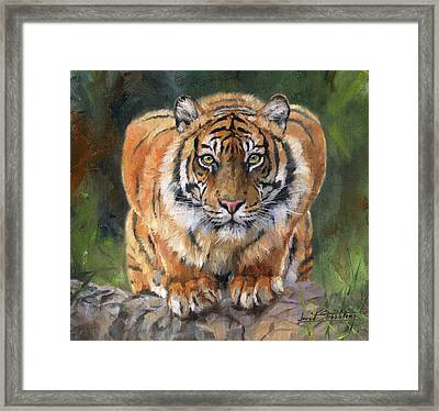 Framed Print featuring the painting Crouching Tiger by David Stribbling