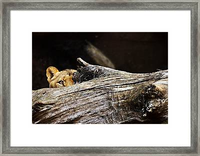 Crouching Tiger Framed Print
