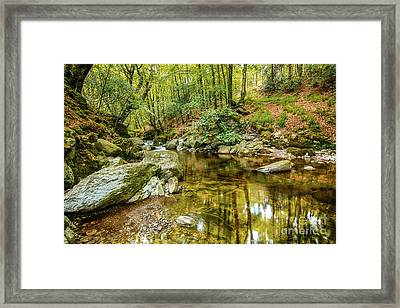 Crough Wood 1 Framed Print