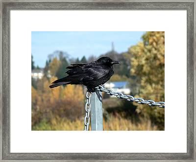 Crow Framed Print by Anastasia Michaels