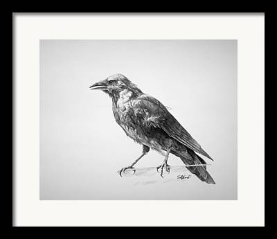 Black Bird Framed Prints
