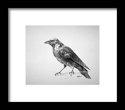 Crow Framed Prints