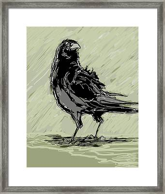 Crow In Rain Framed Print by Peggy Wilson