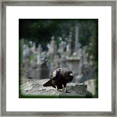 Crow In The City Of Stone Framed Print