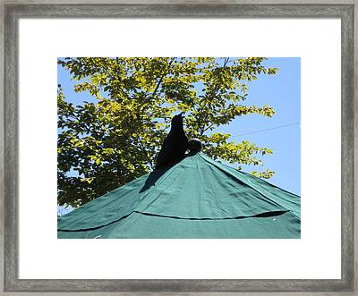 Framed Print featuring the photograph Crow On An Umbrella by AJ Brown
